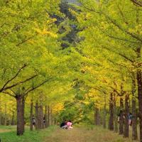 У Віцебскай вобласці хочуць стварыць лес з рэліктавых дрэваў