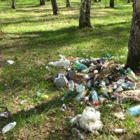 Уголовную ответственность за загрязнение леса в Беларуси хотят заменить большими штрафами