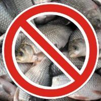 Рыбачь по правилам! В Витебской области введены запреты на лов рыбы