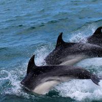 Фталаты обнаружили в организмах дельфинов во Флориде