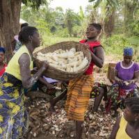 Падение международных цен приведет к снижению стоимости импорта продовольствия для беднейших стран