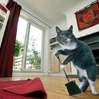 7 самых грязных мест в вашем доме. И это не унитаз!