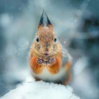Финский новичок-фотолюбитель снимает диких животных, словно гламурных фотомоделей