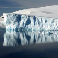 Фильм о глобальном потеплении «Лёд и небо» закроет Каннский фестиваль