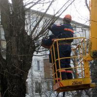 Чиновники опровергают подозрения минчан, что деревья в городе стригут неправильно