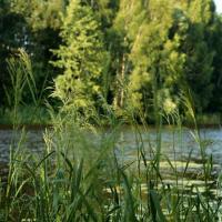 Брестская молодёжь очистила берега реки Мухавец
