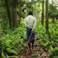 Лесной человек: 37 лет житель Индии один сажает деревья на острове (видео)