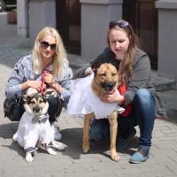 Собачья свадьба. Креативная акция в поддержку чипирования в Гродно