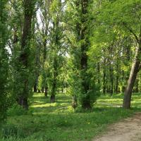 Результаты соцопроса: почти 85% жителей Сельхозпосёлка против любого строительства в Котовке