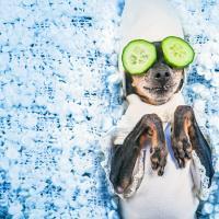 В России законопроект об ответственном обращении с животными прошёл второе чтение в Госдуме. Спустя семь лет