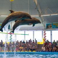 Праздник у китов и дельфинов, или Имеют ли дельфинарии право на существование?