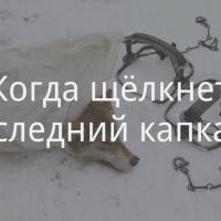 «Надо это фото печатать и чиновникам присылать!» В наших силах запретить капканы в Беларуси
