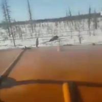 В Якутии вахтовики на грузовиках намеренно задавили медведя