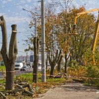 Вырубка деревьев в районе улицы Корженевского (+ видео, фото)