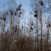 С 15 февраля запрещается трогать гнёзда птиц