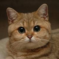 О чём говорят кошки: появился первый переводчик с кошачьего языка