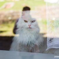 Котофест в Осмоловке: как оценивали кошек в окошках