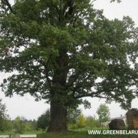 Зелёный портал объявляет итоги конкурса «Здравствуй, дерево!» и поздравляет победителей!