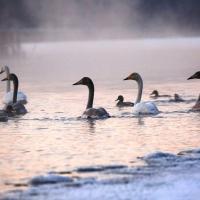 В Беларуси появится второй трансграничный биосферный резерват «Освейский — Красный бор — Себежский»