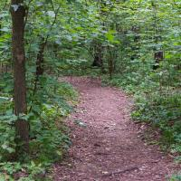 Отбитый у «Амкодора» участок леса в Колодищах оказался уникальным природным комплексом. Что дальше?