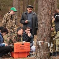 Почему в Беларуси погибает ель, и куда исчезли дубравы?