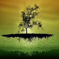 Рекорд в Индии: жители высадили за 24 часа почти 50 млн деревьев
