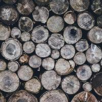 Лукашенко требует искоренить серые схемы в экспорте древесины