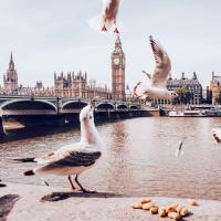 7 волонтёрских программ на лето: от Нью-Йорка до Шотландии