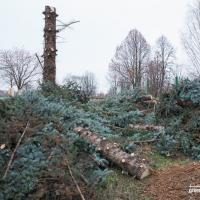 В Минске вырубили очередной парк