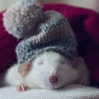 Включите отопление! Несколько способов согреться в холодной квартире