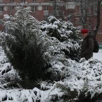 Ігар Корзун правёў маніторынг дрэваў у Міхайлаўскім скверы