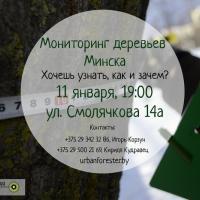 Минчан зовут на мониторинг столичных деревьев