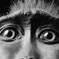 Экономика экспериментов над животными: каждый год почти 100 миллионов тестов!