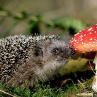 И снова здравствуйте. В Гомельской области грибами уже отравились 6 человек (+советы)