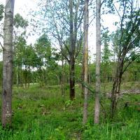 Лесхоз «Красносельское» решил обойтись без международного сертификата