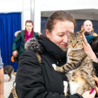 Двадцать котов и собак из приютов нашли любящие семьи на выставке «Дорога домой»