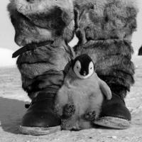 Зачем Беларуси Антарктика?