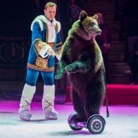 В Одессе оштрафовали цирк. Причина – участие в номере бурого медведя из Беларуси
