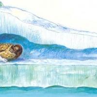Снежные домики для нерп и их малышей построят на берегу Финского залива