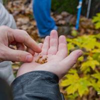 «Для столетнего дерева он достиг хороших параметров». Ученые рекомендовали признать дуб на Роменской улице памятником природы