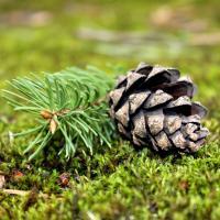 «Чуть изменилась температура, поменялся климат — и ель, граб и ольха неминуемо исчезнут». Министр лесного хозяйства — об основных угрозах для беларусских лесов