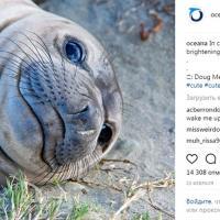Восемь Instagram-аккаунтов, владельцы которых любят природу и заботятся об экологии