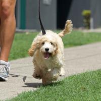 Минчан научат выгуливать собак