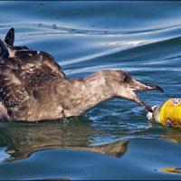 8 миллионов тонн пластика - ежегодный след человека в мировом океане