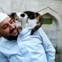 Имам приютил бездомных котов в стамбульской мечети