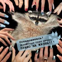 «Животные — не одежда!»: в Минске состоялась просветительская встреча в защиту пушных зверей
