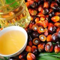 В Гродно пальмовое масло тестируют на крысах и студентах. Первые результаты уже есть