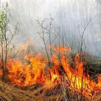 Все равно палят: на Гомельщине зафиксированы массовые возгорания, есть случай с летальным исходом