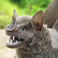 Им не нужен костюм на Хэллоуин: самые страшные животные мира
