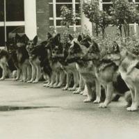 Собака, как спецсредство для милиционеров-кинологов — что писали в архивах 1920-х годов